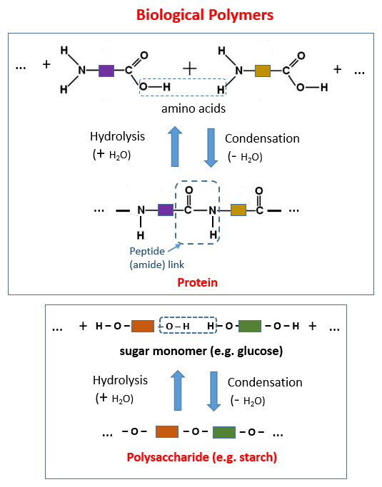 Natural Polymers (Amino Acids, Proteins, Glucose, Starch)